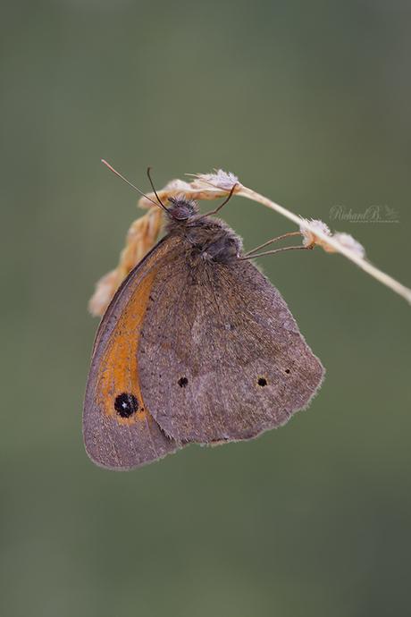 Hanging Brown..