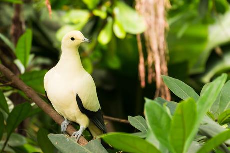 Mooie gele vogel