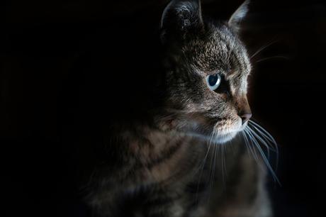 kat is geconcentreerd