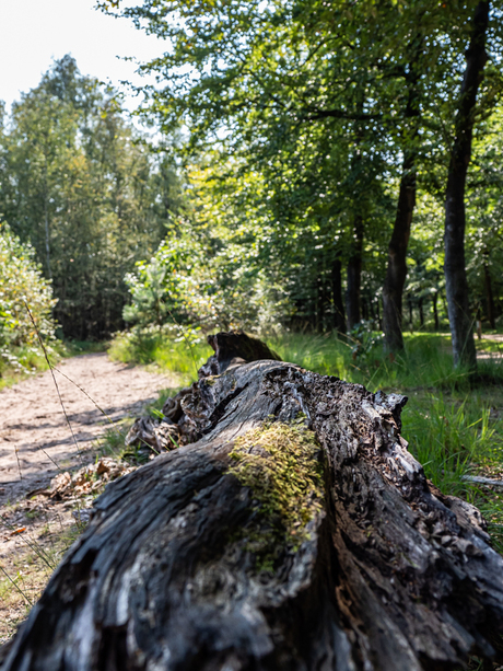 Mastbos Vergaand hout