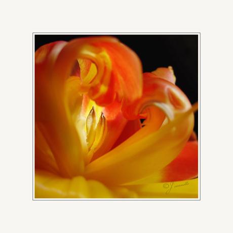 Het zonnetje in huis 2................Tulp