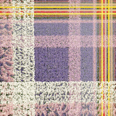 bollenveld in Mondriaan style
