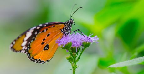 Fairytale Butterfly