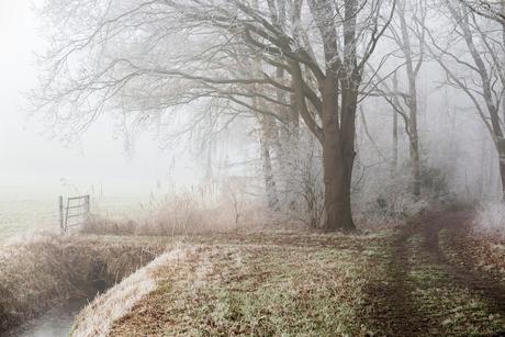 Rijp en mist