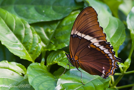 Vlinders in Artis 6