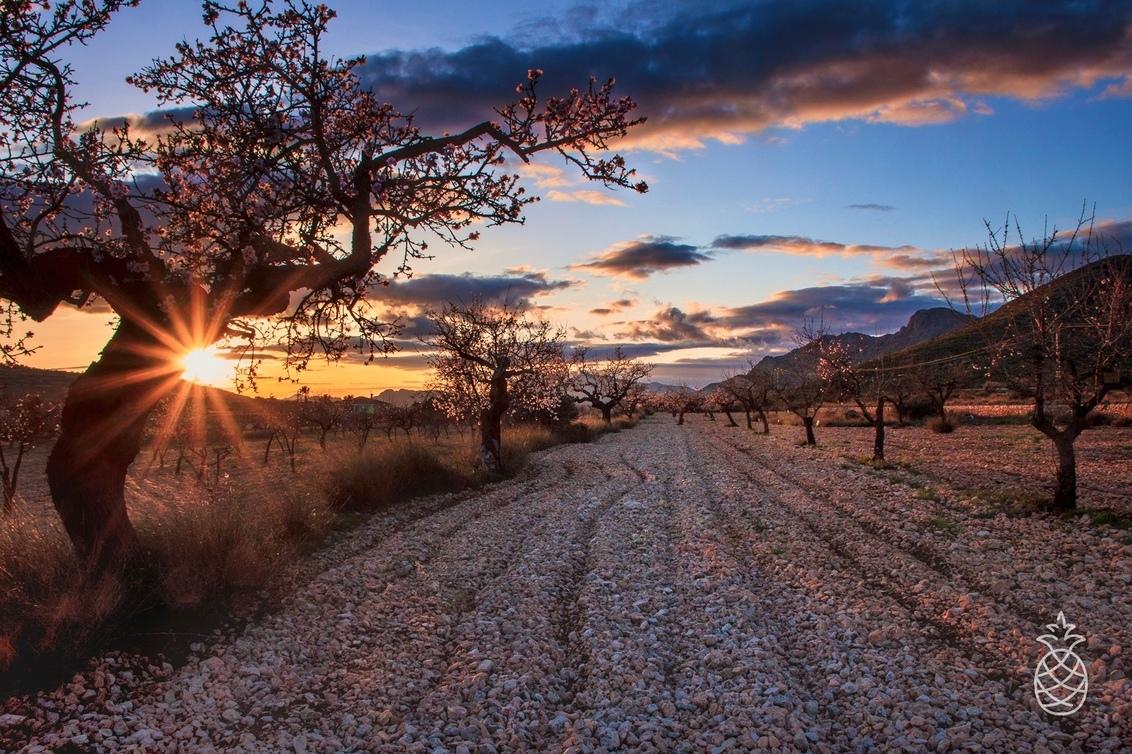 Spring is coming... - De eerste amandelbloesem is alweer zichtbaar Blijft genieten, gelijk de zonsondergang maar meegepakt.... - foto door HenkPijnappels op 29-01-2020 - deze foto bevat: lucht, wolken, lente, natuur, licht, avond, zonsondergang, landschap, tegenlicht, bomen, bergen, spanje