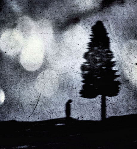 The Wispering tree tells you to be not afraid off the dark...