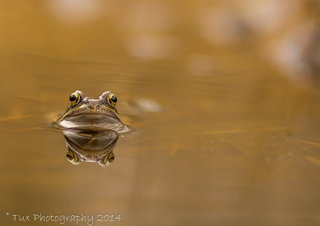 Finding rest among hundreds of frogs