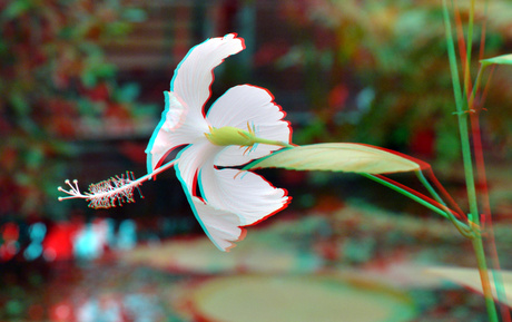 Plant Hortus Botanicus Leiden 2020 3D
