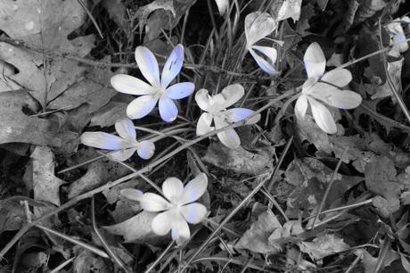 Ontluikende lente..februari 2015