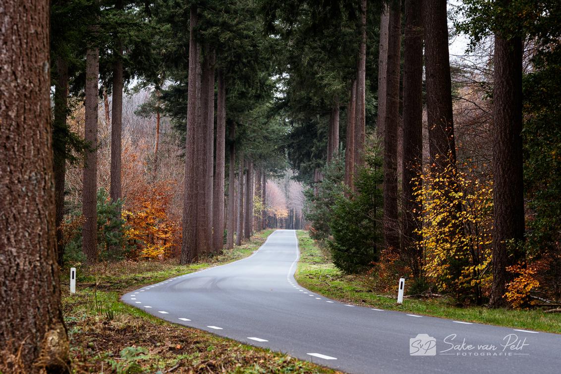 Bosweg - Deze foto heb ik afgelopen weekend gemaakt in het Speulderbos. Het was een grijze dag zonder zon, eigenlijk niet echt een dag waarop je mooie foto's  - foto door Sake-van-Pelt op 26-11-2020 - deze foto bevat: groen, lucht, wolken, zon, boom, natuur, geel, licht, herfst, blad, vakantie, landschap, bos, tegenlicht, bomen, den, berm, beuk, nederland, weg, dennen, paaltje, asfalt, laan, paaltjes, strepen, douglas, speulderbos, spar, bosweg, seizoen, statig, seizoenen, beuken, sparren