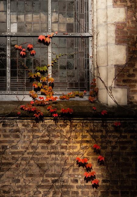 Herfstkleuren - Herfstkleuren op een kerkmuur in Kevelaer - foto door Studio59 op 30-10-2018 - deze foto bevat: kleur, straat, bladeren, herfst, lichtval, kerk, stad, raam, kevelaer, glas in lood, sigma 105mm, sony a7iii