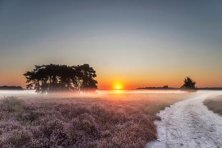 Regte Heide - De Regte heide met zonsopkomst. - foto door daveenrenee op 15-09-2019 - deze foto bevat: lucht, wolken, zon, natuur, vakantie, landschap, mist, heide, bos, tegenlicht, zomer, nederland