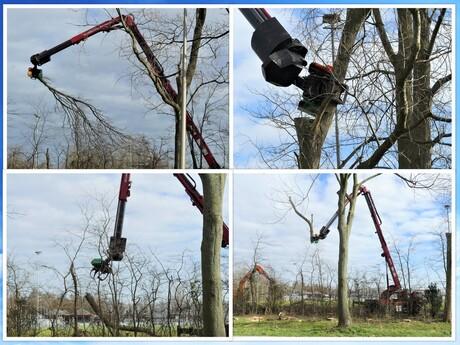 collage galgeweg hoge bomen rooiwerk 24 feb 2021