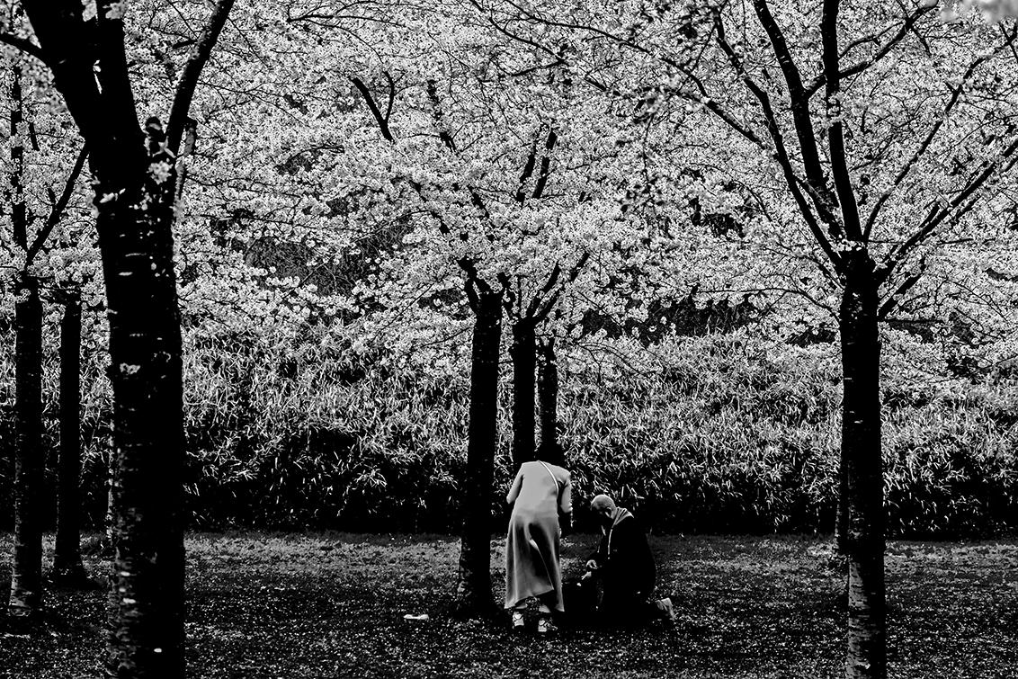 Bloesembos 3 - Deze in zwart-wit uitvoering geupt - foto door nak-kos op 13-04-2021 - deze foto bevat: natuur, bloesem, amstelveen, zwart-wit, voorjaar, fabriek, mensen in de natuur, zwart, boom, straatlantaarn, afdeling, natuurlijk landschap, kofferbak, hout, zwart en wit