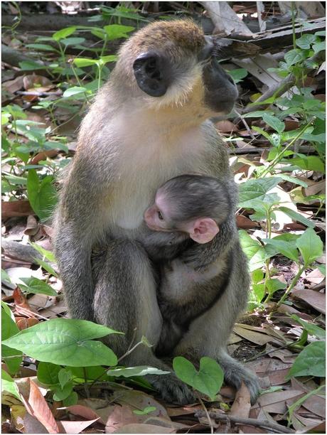 Echte moederliefde