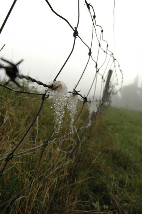 Schapenvacht in de mist