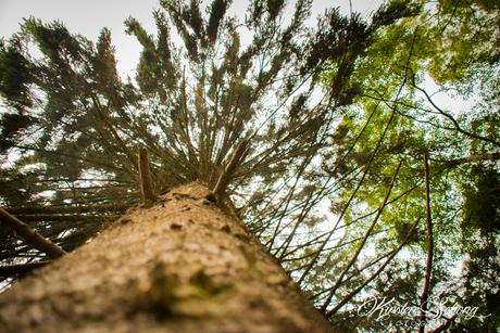 Kijk Langs de boom