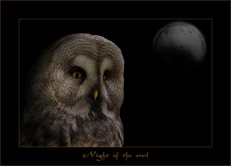 Night of the Owl .......