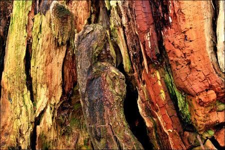 Houtsnijwerk in de natuur - Wat kan een oude Wilgenboom toch mooi zijn van kleur - foto door Teunis Haveman op 29-01-2021 - deze foto bevat: groen, macro, boom, natuur, geel