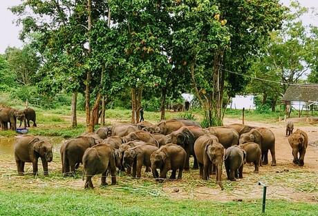 The Elephants Gathering
