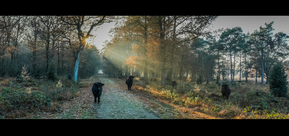 * So Far * - Allen bedankt voor de leuke reacties en waarderingen bij mijn laatste upload. - foto door AriEos op 12-11-2020 - deze foto bevat: licht, herfst, landschap, heide, bos, tegenlicht, bomen