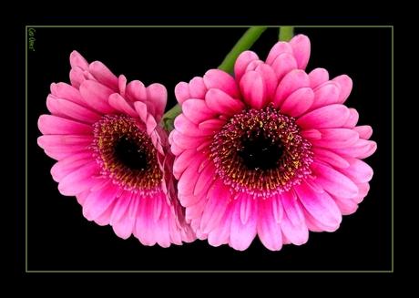 FleuriSant*