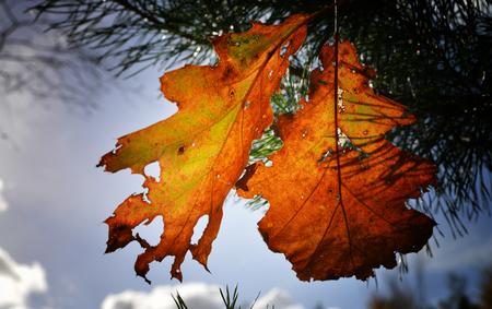 Mastbosch 2 - Mastbosch Breda - foto door egonzitter op 05-11-2013 - deze foto bevat: bladeren, herfst, breda, mastbos