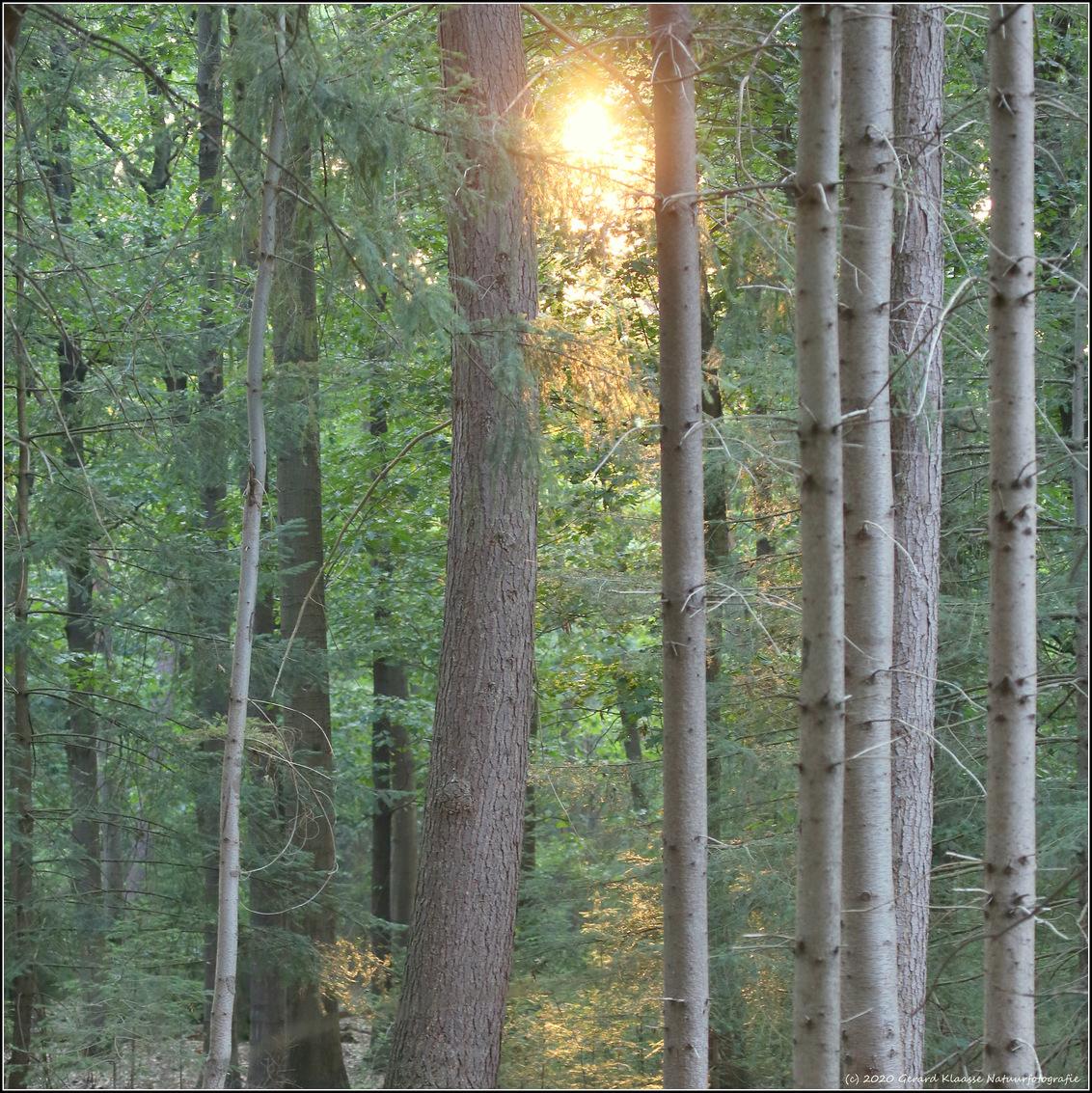 Stilte - Deze zomer liepen we door een bosrijk gebied in Brabant in de hoop daar wat wild te spotten. Even probeerde de ondergaande zon zich een weg te banen  - foto door gaklaasse op 10-10-2020 - deze foto bevat: natuur, licht, avond, zonsondergang, landschap, bos, tegenlicht
