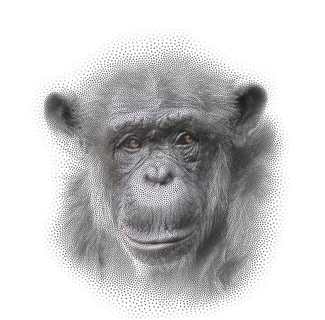 Dods / stippen portret chimp