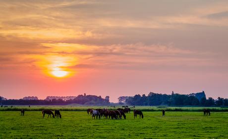 Morning grazing 《晨牧》