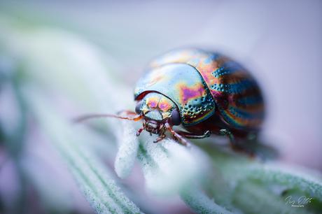 Kleurenpalet in het klein