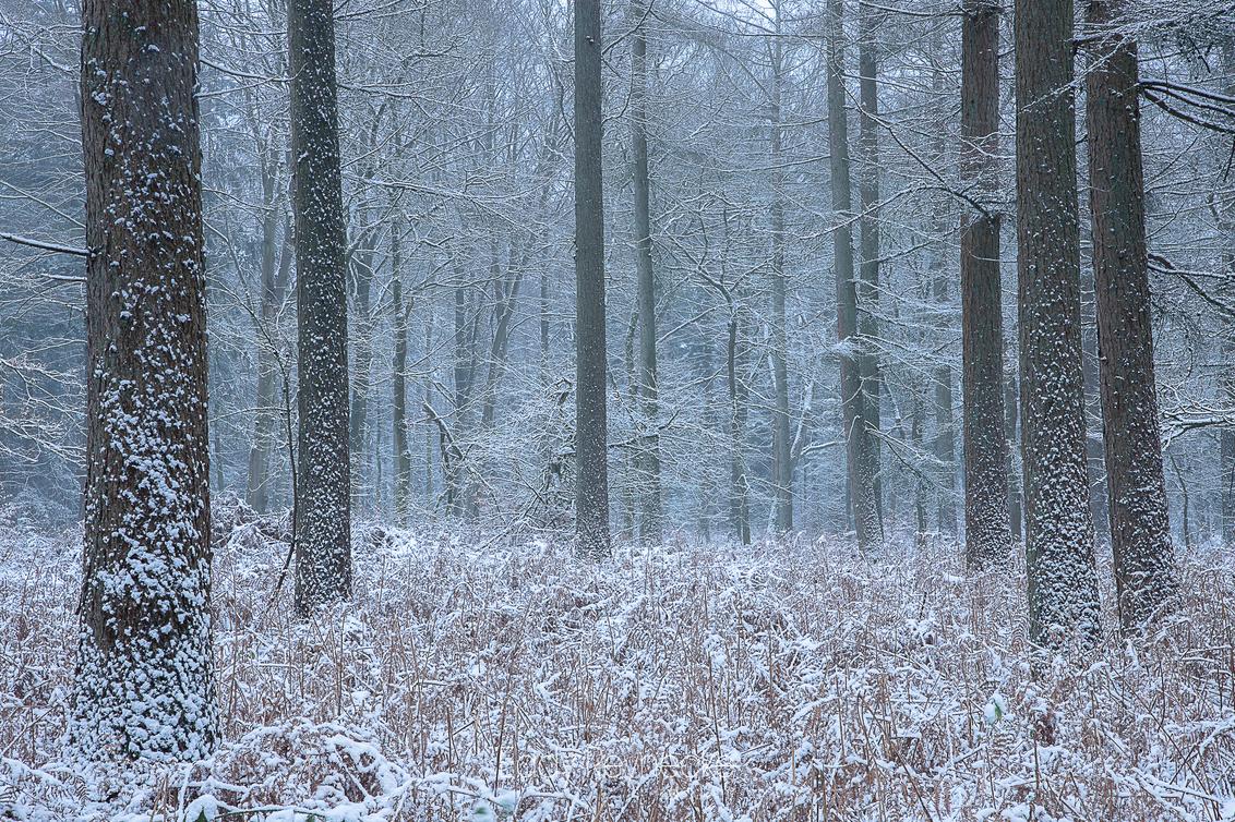 Winter Wonderland - - - foto door eddy-reynecke op 27-02-2021 - deze foto bevat: natuur, licht, sneeuw, winter, landschap, drenthe, bos, tegenlicht, bomen, winterwonderland, evertsbos