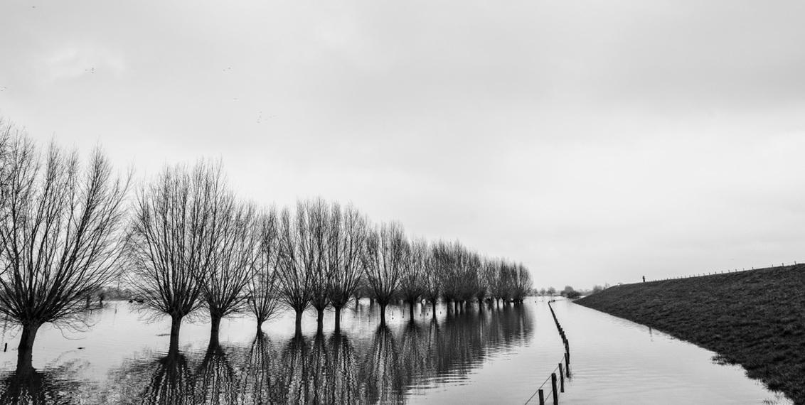 Hoogwater - Ik keer even terug naar de hoogwaterstand. Nog maar twee weken geleden, daarna sneeuw, ijs en lente....wat een verschillen. Allen bedankt voor de fi - foto door hvr2105 op 22-02-2021 - deze foto bevat: uiterwaarden, hoogwater, randwijk
