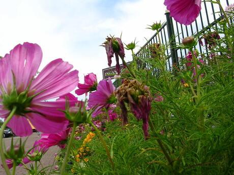 Wilde planten