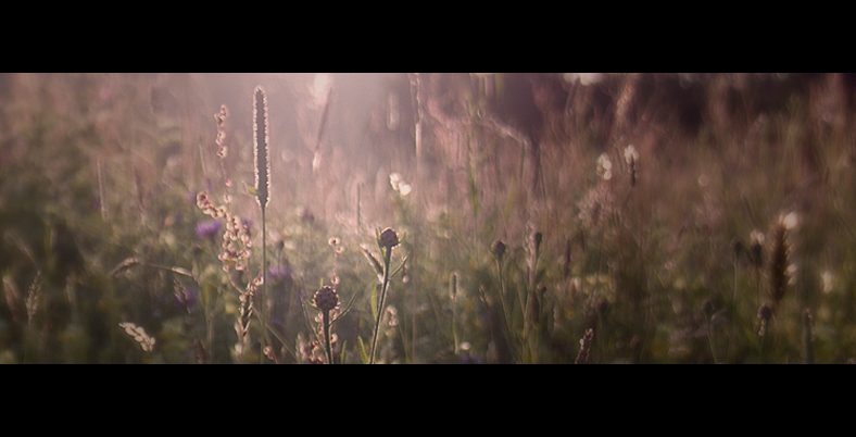Another june eve - .. - foto door hillegonda op 24-06-2012 - deze foto bevat: avond, tegenlicht, juni