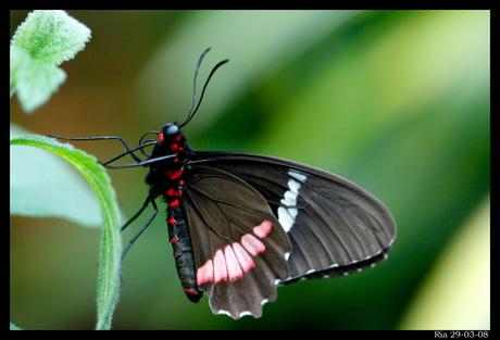 Mijn 1e vlinder
