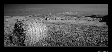 Fields of Scotland