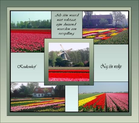 Hollands!!!