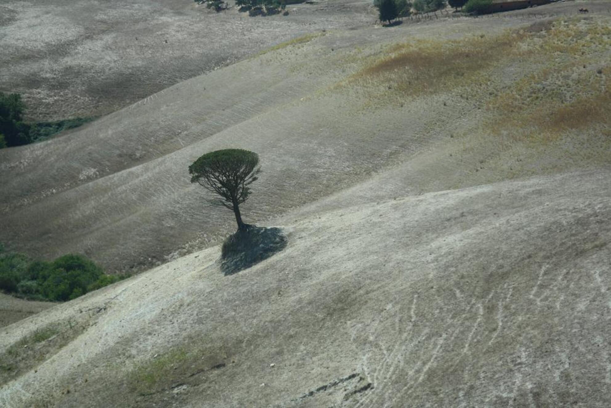 only the lonely - kale omgeving met boom - foto door eluurtsema op 20-09-2010 - deze foto bevat: dor, begroeid