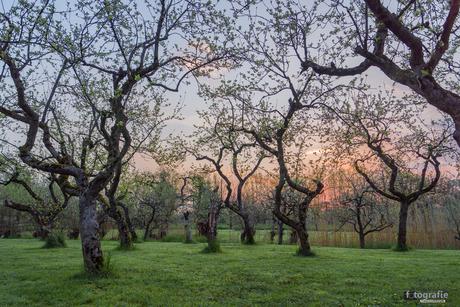 Zonsopkomst in de boomgaard