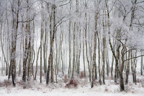 Winterlandschap_02