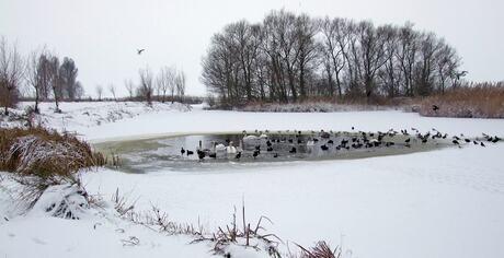 winterlandschap2.jpg