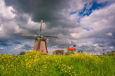 Hollandse luchten en koolzaad