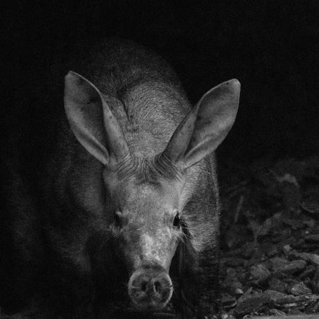 Aardvarken - Mentoraat 2