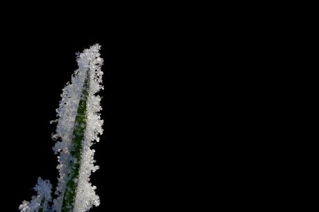 Gras in ijs