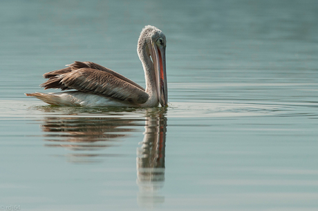 pelican price