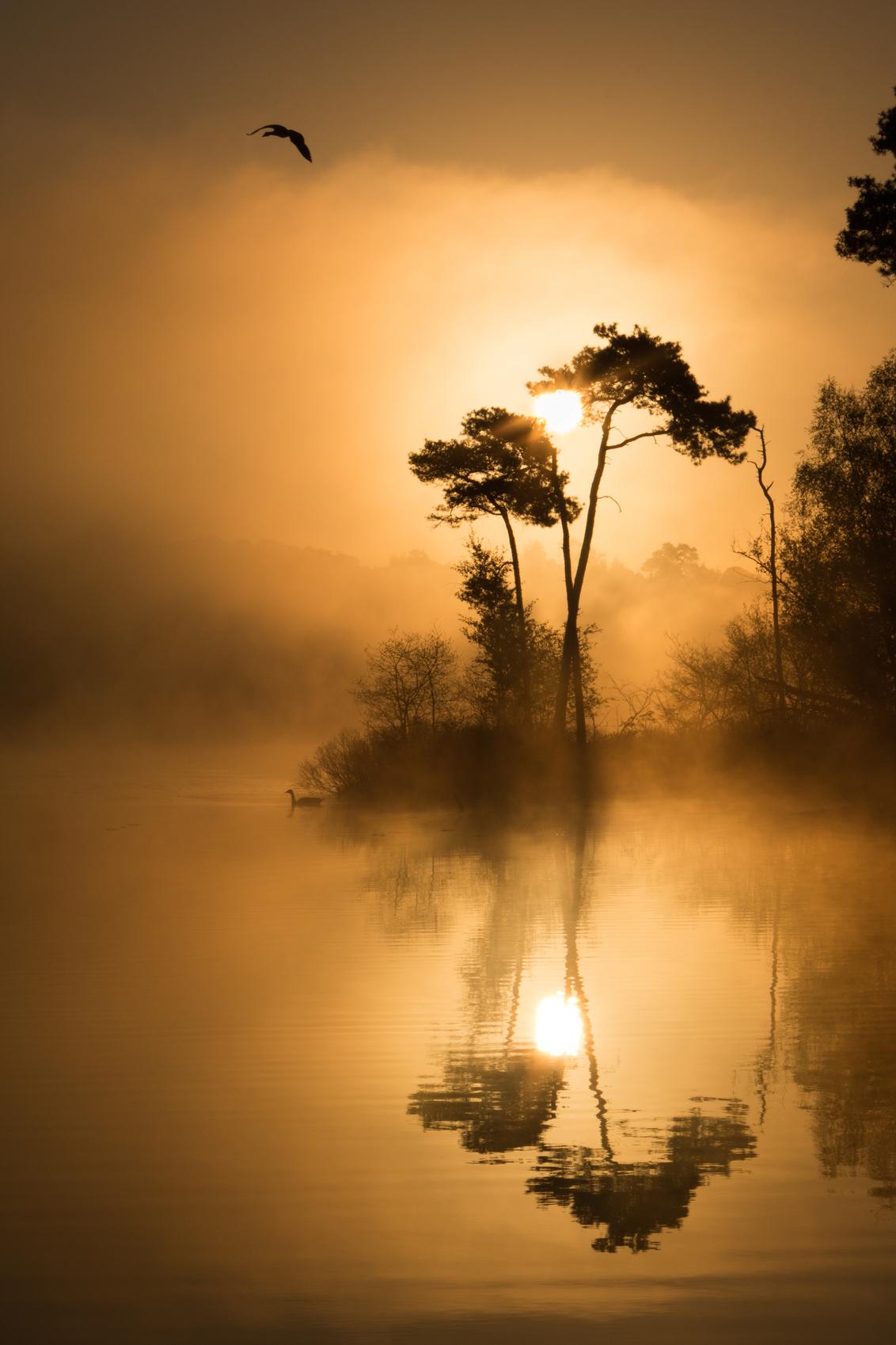 gouden gloed - koningsdag 2017 heb ik bewust de drukte ontvlucht in Tilburg en ben ik gaan genieten van de natuur in de Oisterwijkse vennen.  Heerlijk op een bankj - foto door tirsje op 25-05-2017 - deze foto bevat: lucht, water, lente, natuur, vogels, licht, spiegeling, reflectie, landschap, mist, bos, nevel, tegenlicht, zonsopkomst, bomen, meer, nederland, ven, vennen, monochroom, Noord Brabant, canon70d, nederlandwaterland