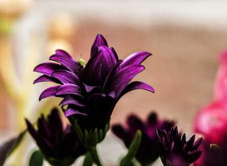 Bloem uit bloemenbak