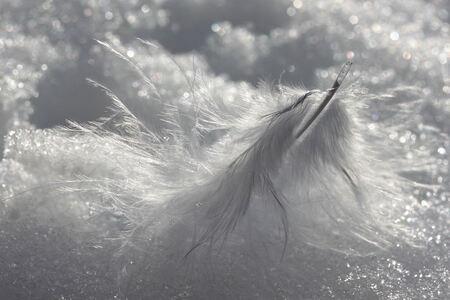 Veertje in de sneeuw - Dit veertje lag half onder de sneeuw en de wind blies het heen en weer. - foto door tania1971 op 10-02-2013 - deze foto bevat: sneeuw, veertje